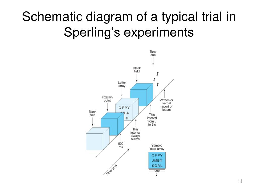 Schematic diagram of a typical trial in Sperling's experiments