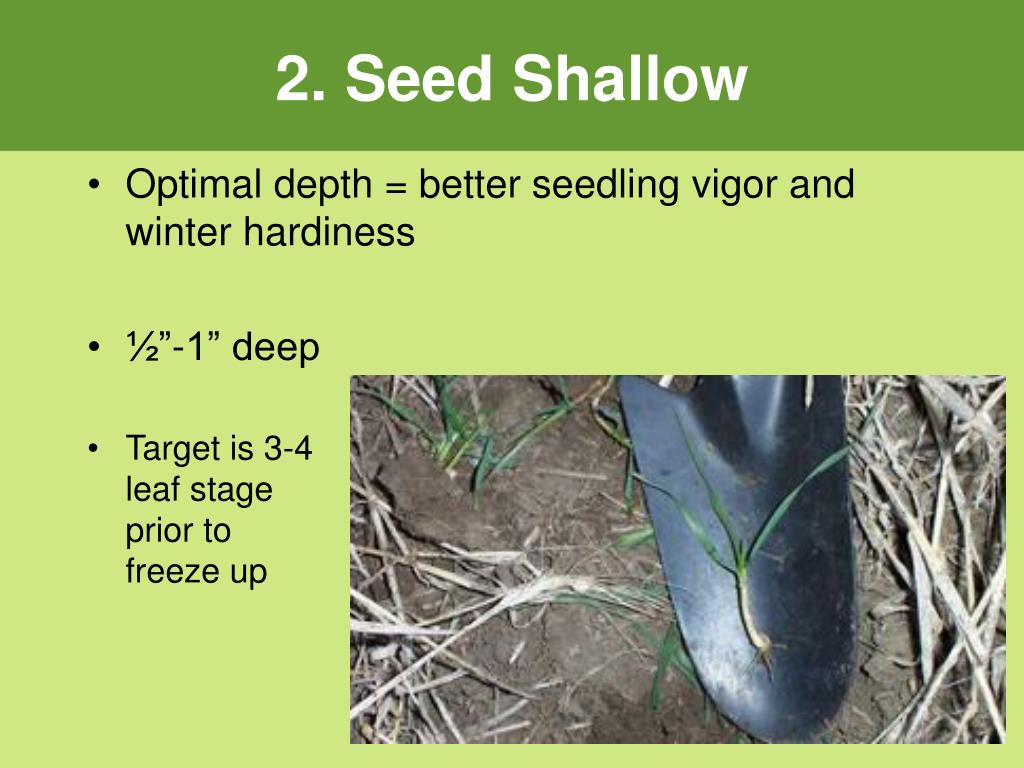 2. Seed Shallow