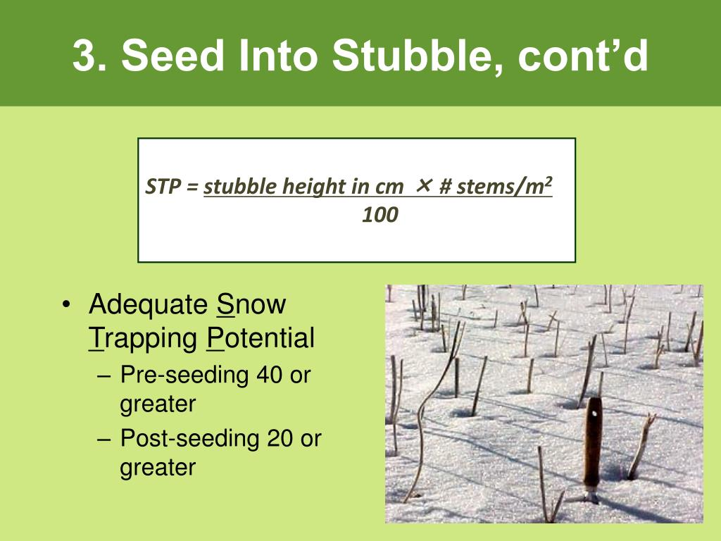 3. Seed Into Stubble, cont'd