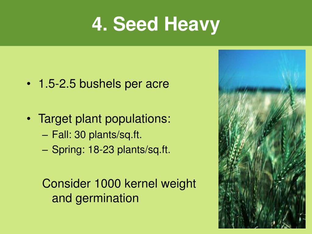 4. Seed Heavy