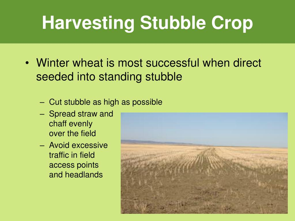 Harvesting Stubble Crop
