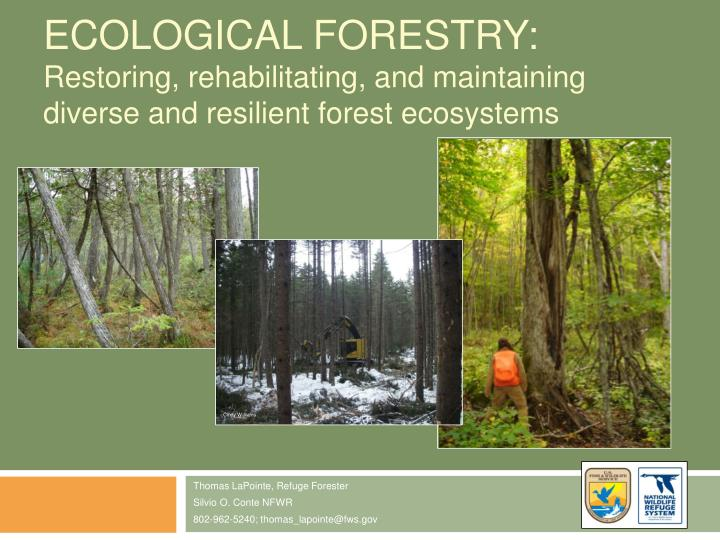 Ecological Forestry: