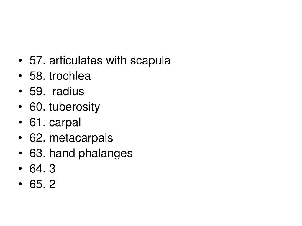 57. articulates with scapula