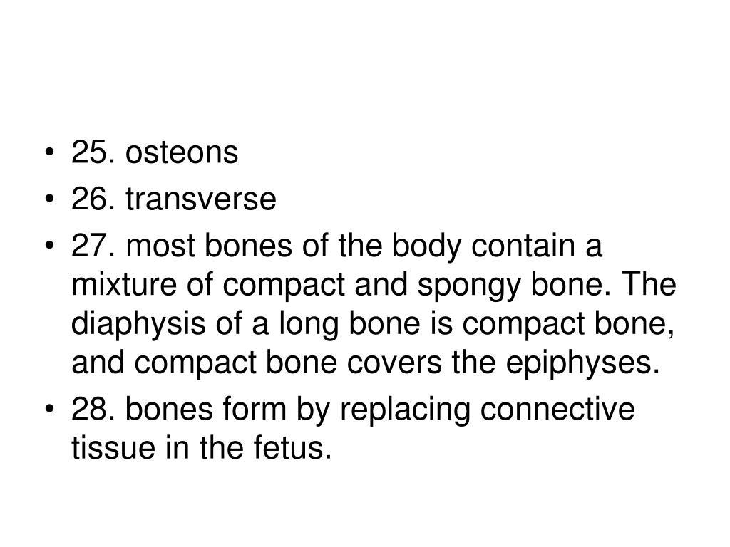 25. osteons