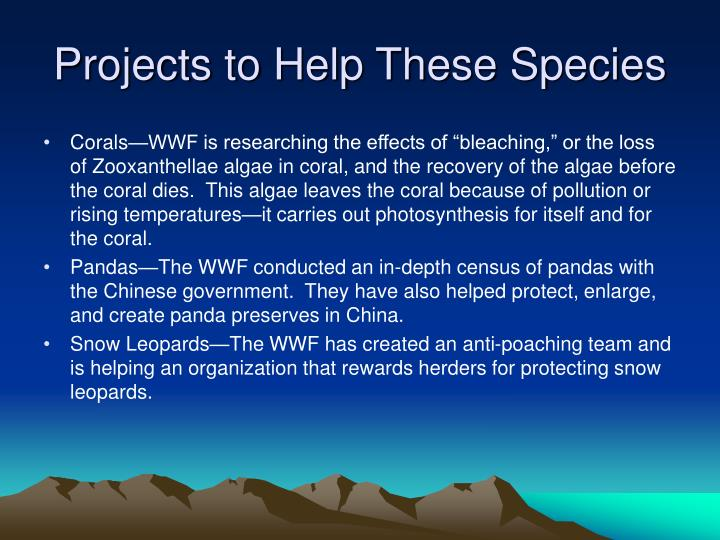 Projects to Help These Species