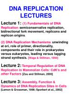 dna replication lectures