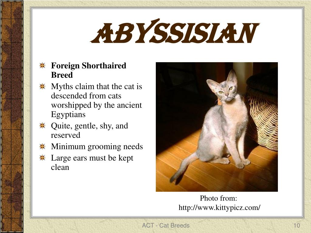 ABYSSISIAN