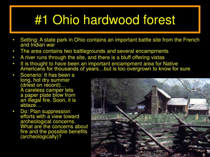 #1 Ohio hardwood forest