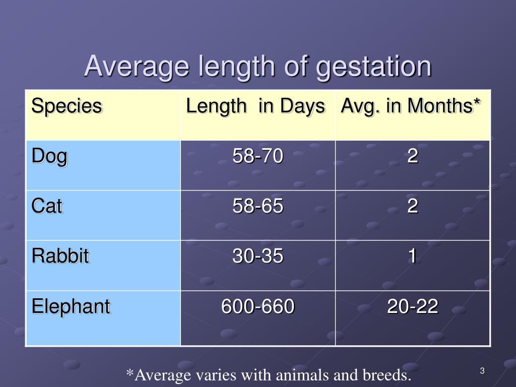 Average length of gestation