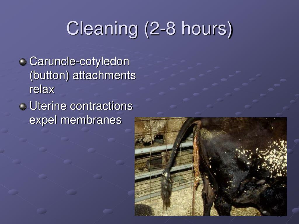 Cleaning (2-8 hours)