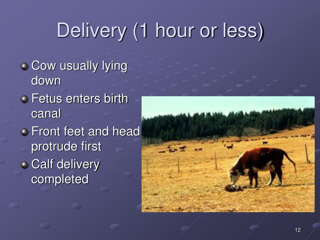 Delivery (1 hour or less)
