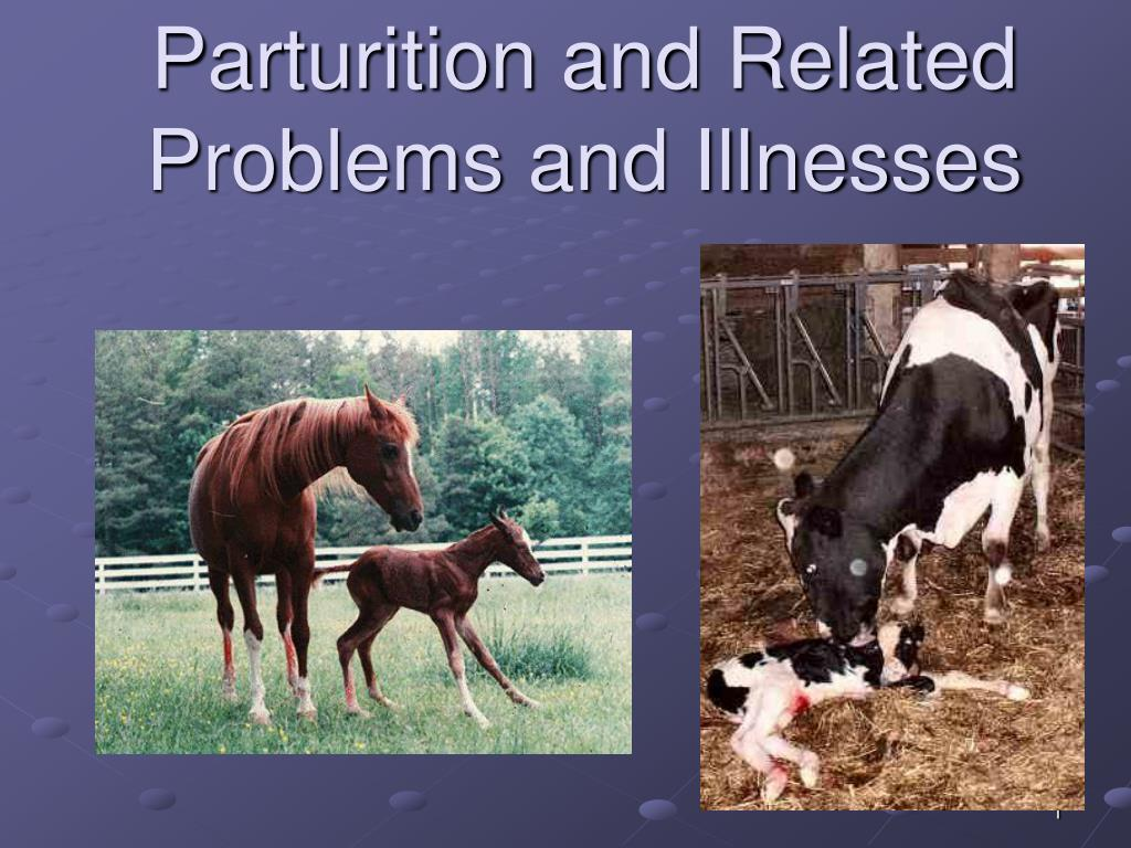 Parturition and Related Problems and Illnesses