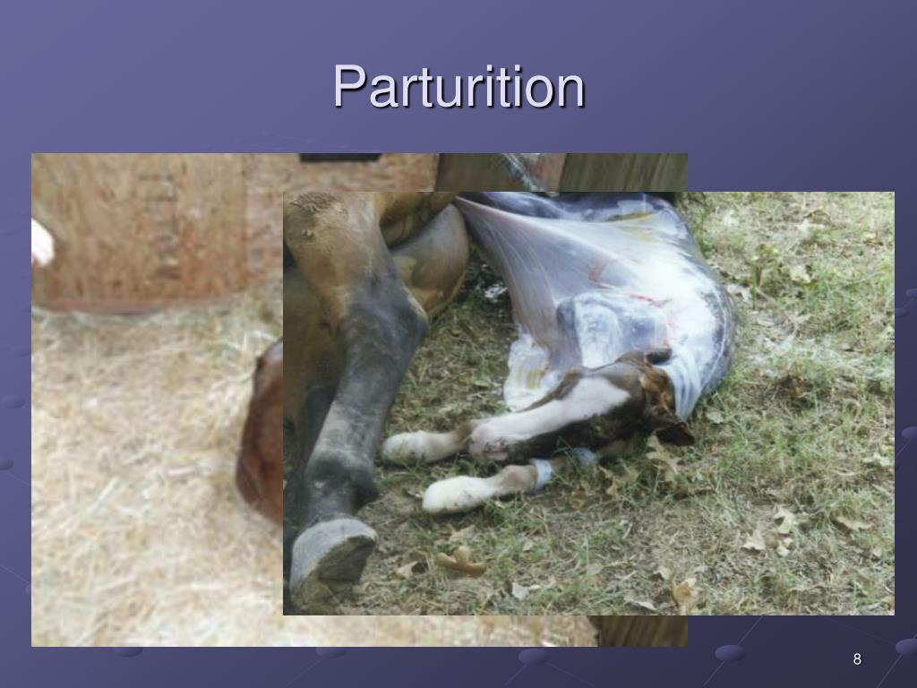 Parturition
