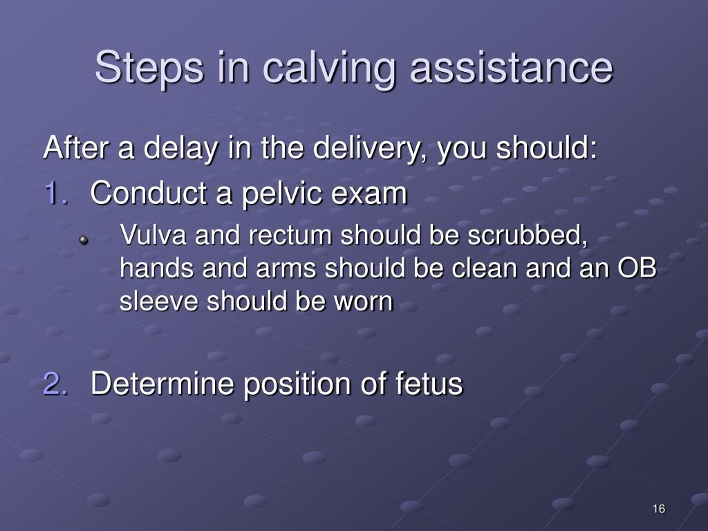 Steps in calving assistance