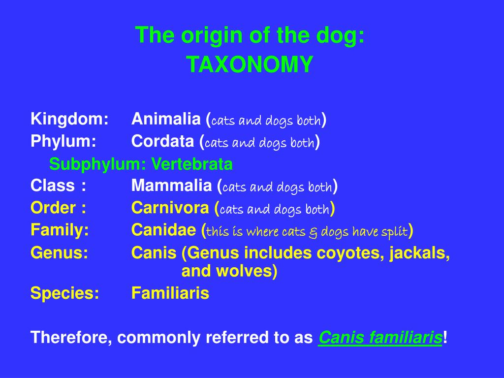 The origin of the dog: