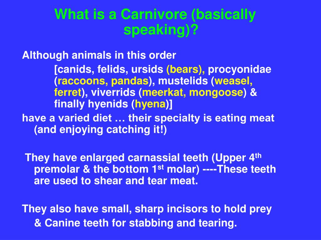 What is a Carnivore (basically speaking)?