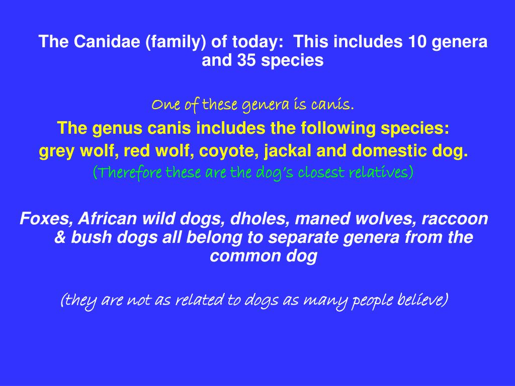 The Canidae (family) of today:  This includes 10 genera and 35 species