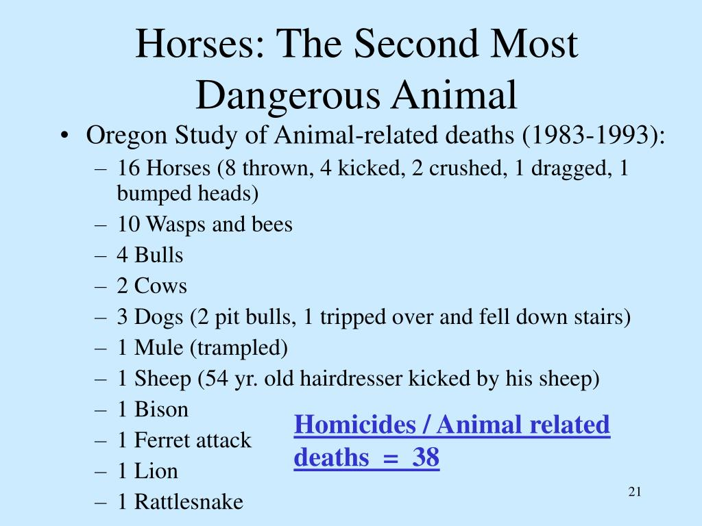 Horses: The Second Most Dangerous Animal