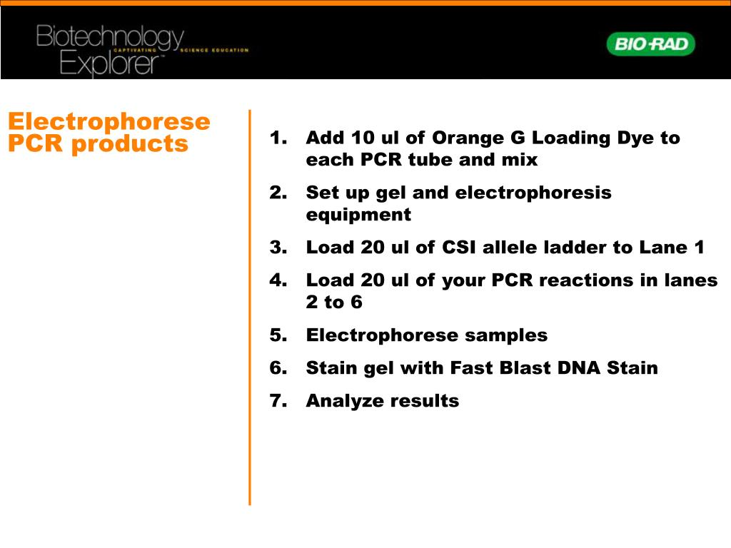 Electrophorese PCR products