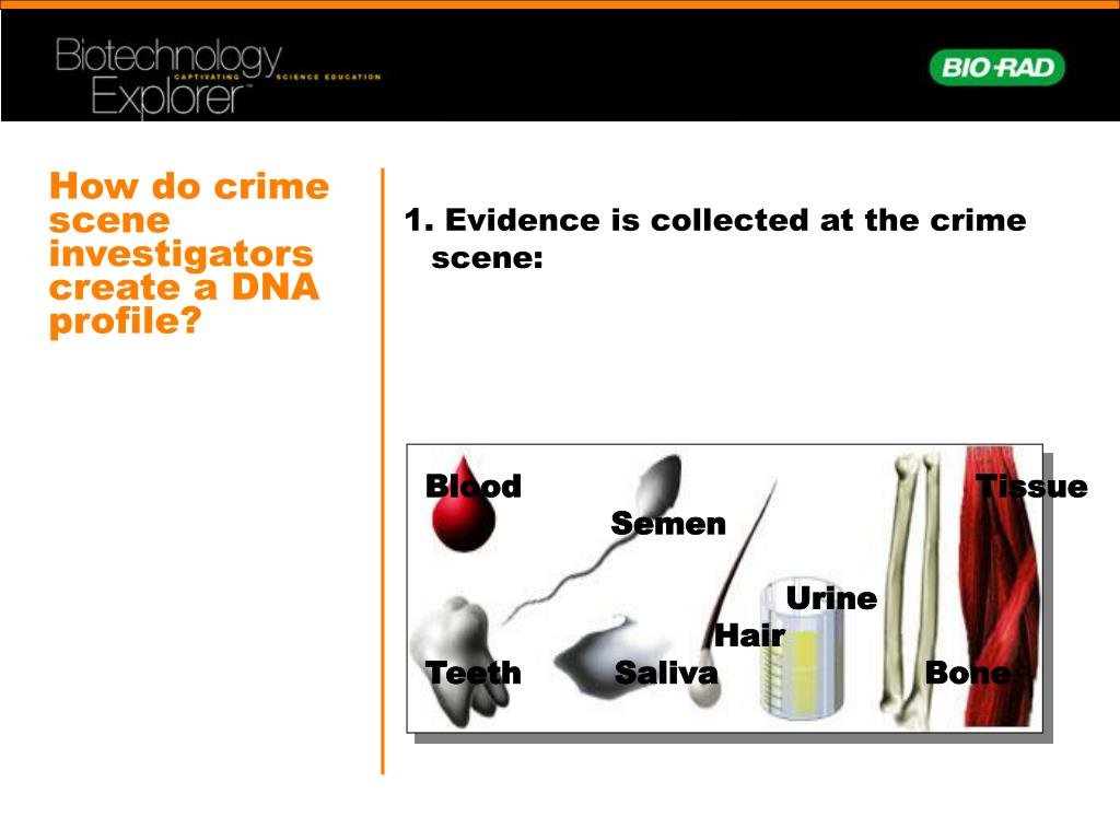 How do crime scene investigators create a DNA profile?