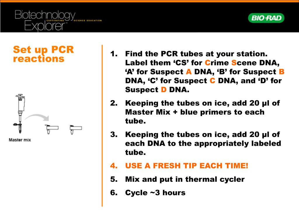 Set up PCR reactions