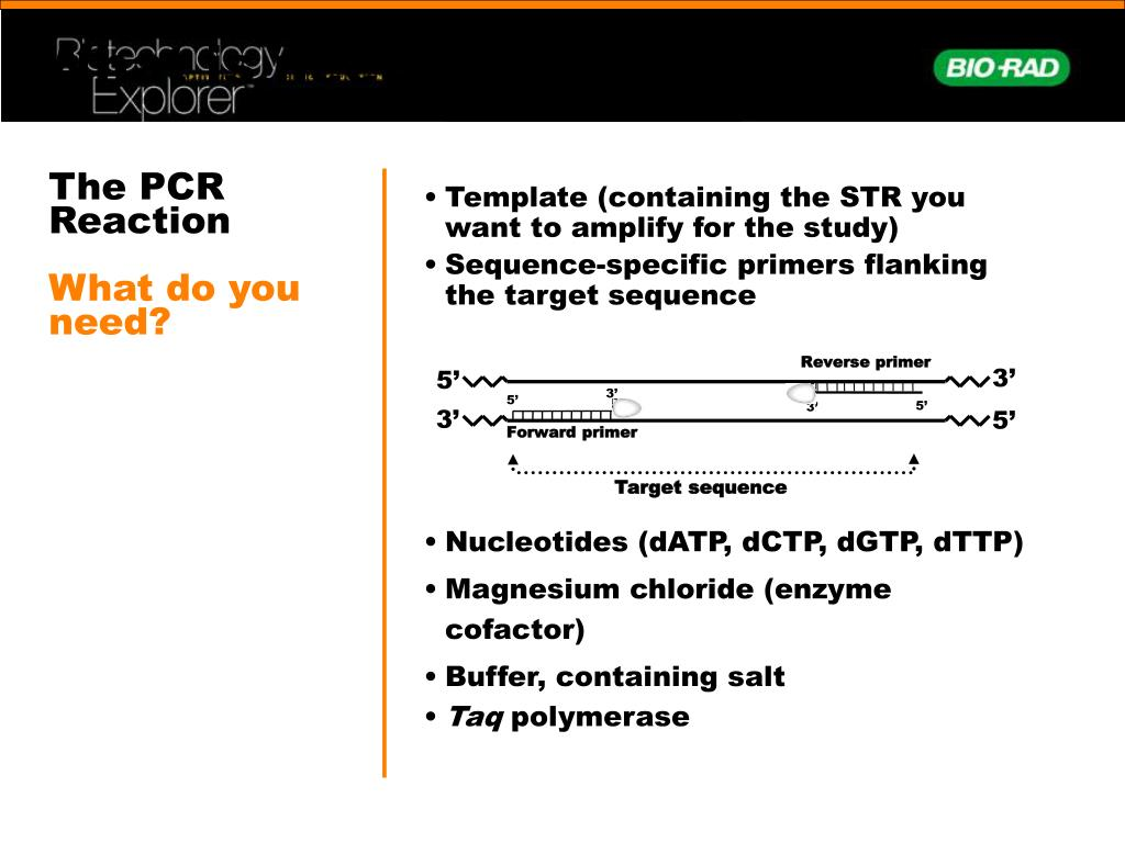 What is needed for PCR?