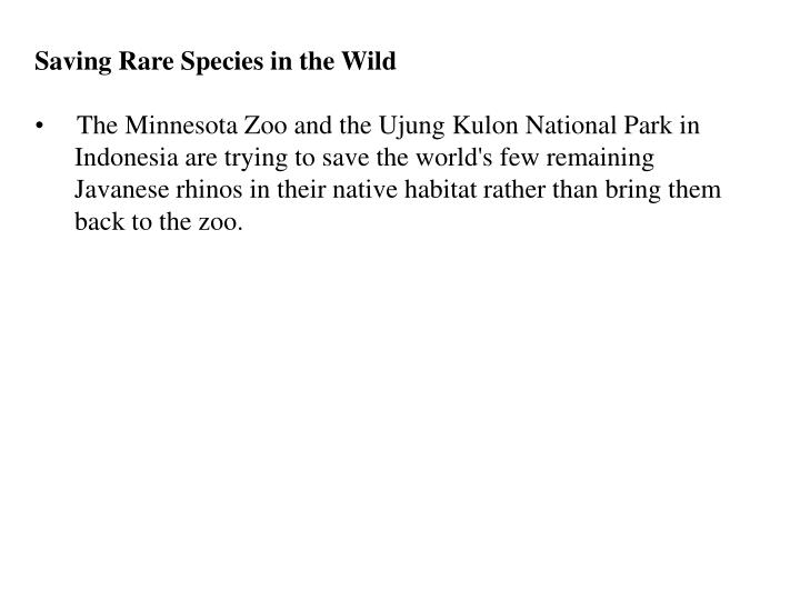 Saving Rare Species in the Wild