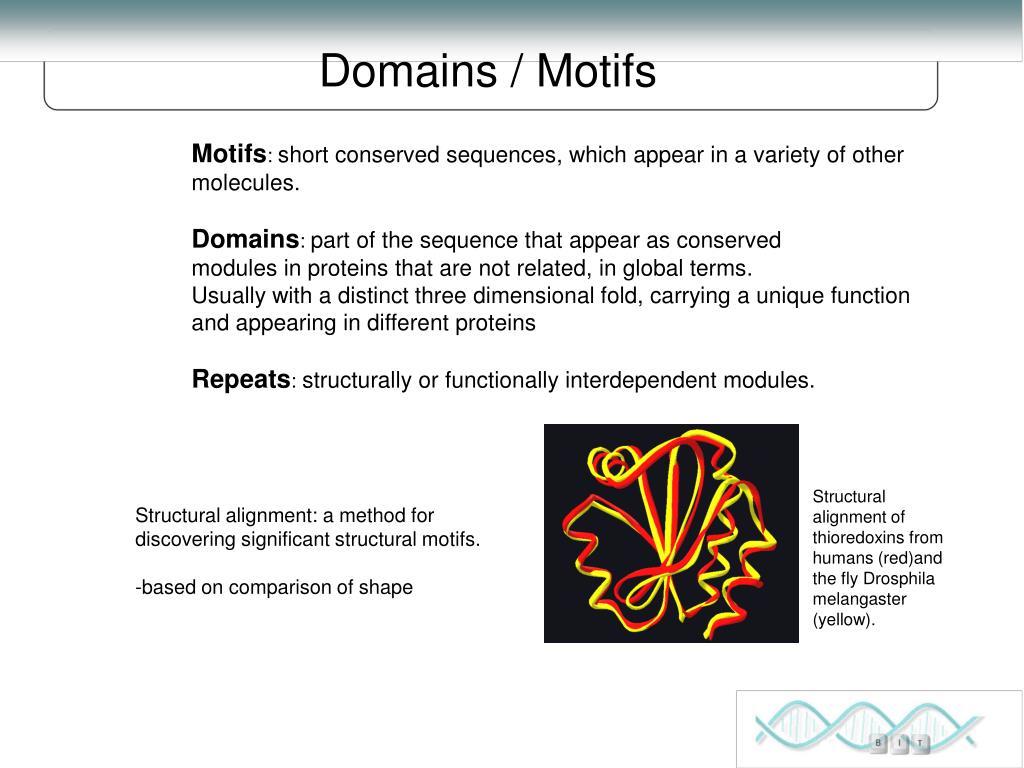 Domains / Motifs