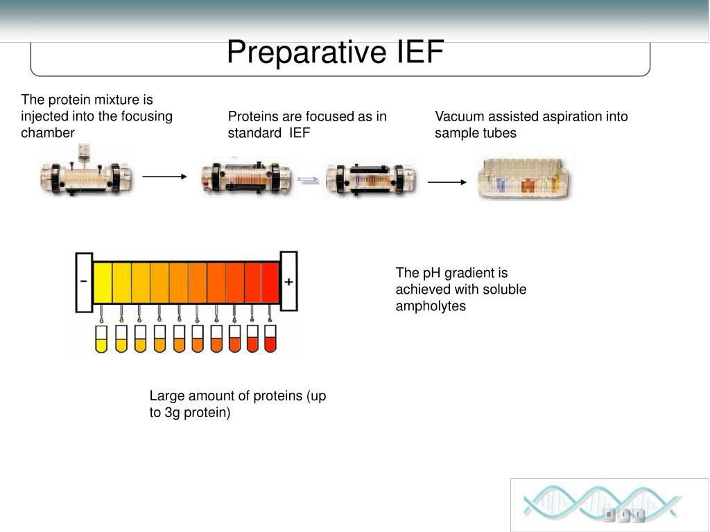 Preparative IEF