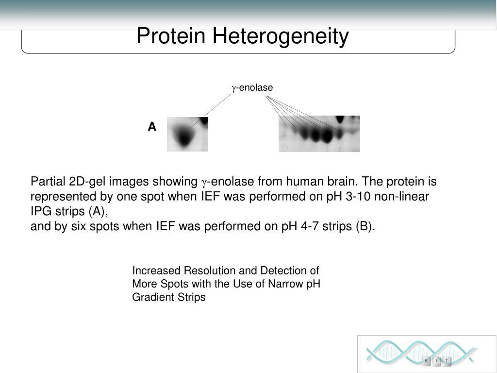 Protein Heterogeneity