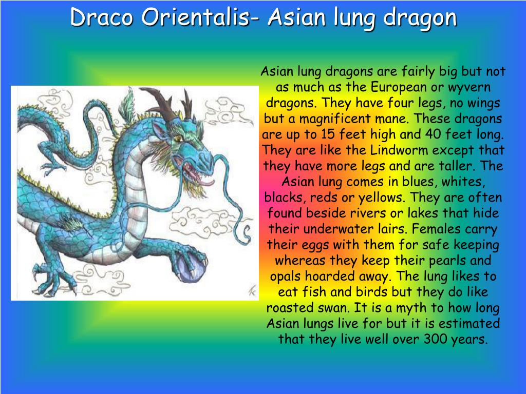 Draco Orientalis- Asian lung dragon