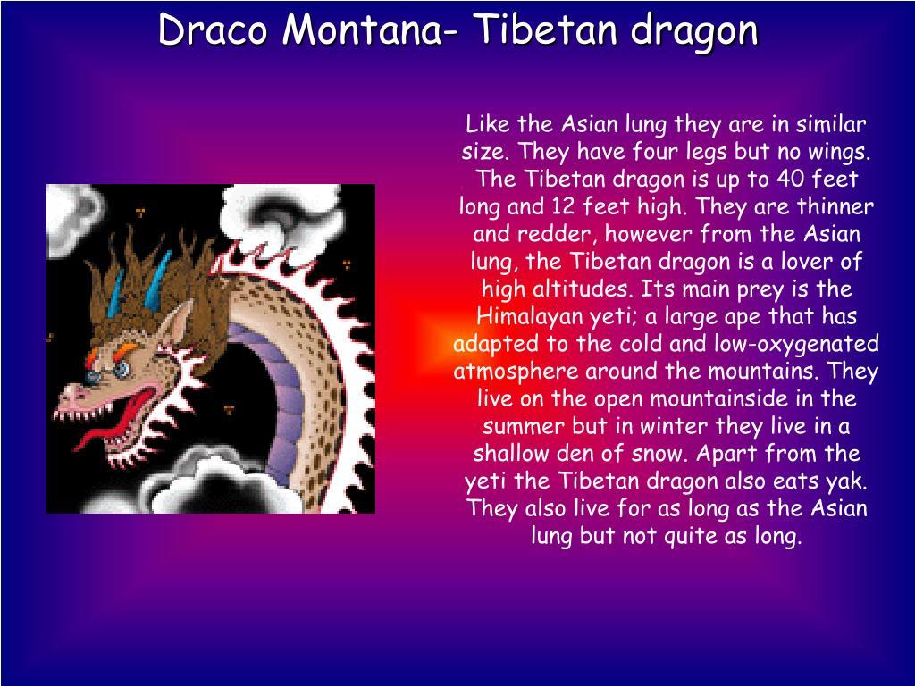 Draco Montana- Tibetan dragon