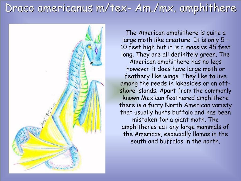 Draco americanus m/tex- Am./mx. amphithere