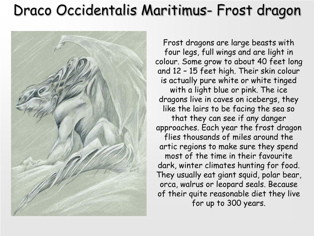 Draco Occidentalis Maritimus- Frost dragon