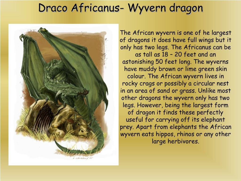 Draco Africanus- Wyvern dragon