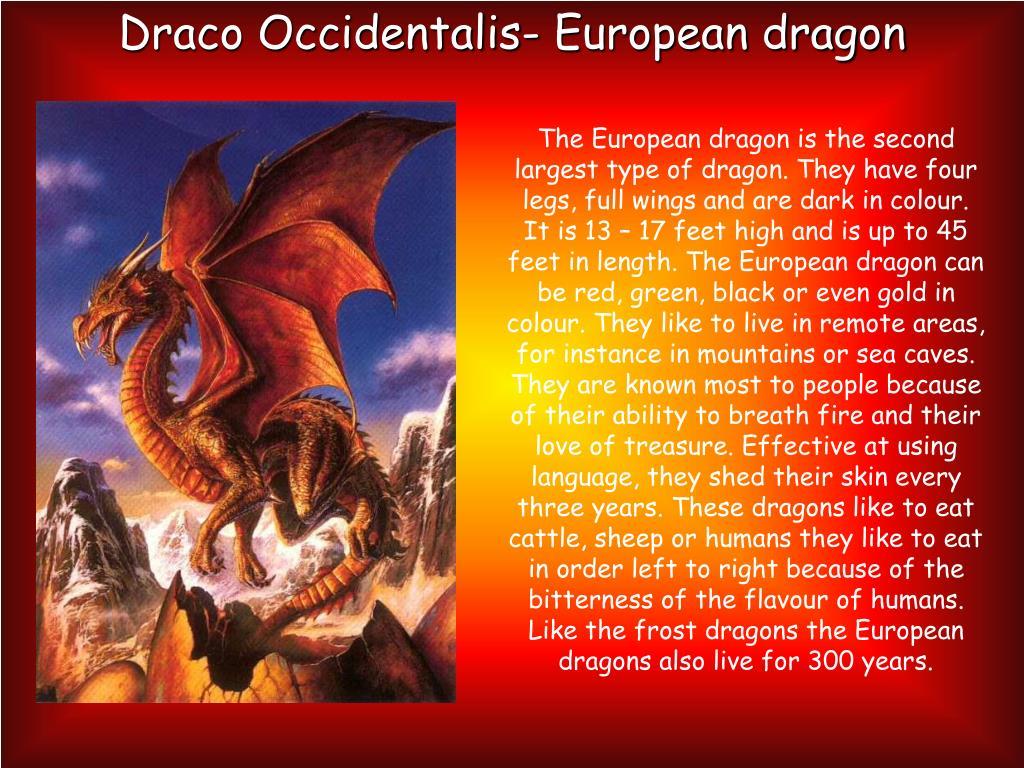 Draco Occidentalis- European dragon