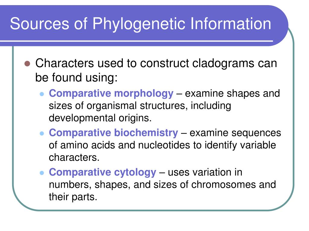 Sources of Phylogenetic Information