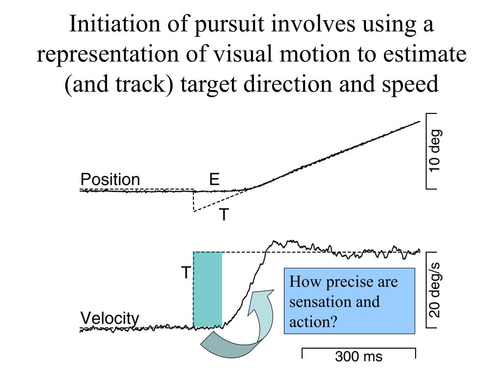 Initiation of pursuit involves using a representation of visual motion to estimate (and track) target direction and speed