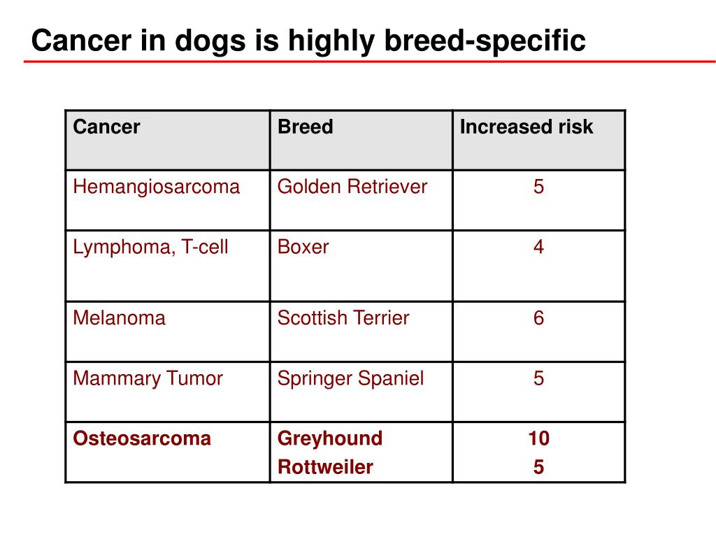 Cancer in dogs is highly breed-specific