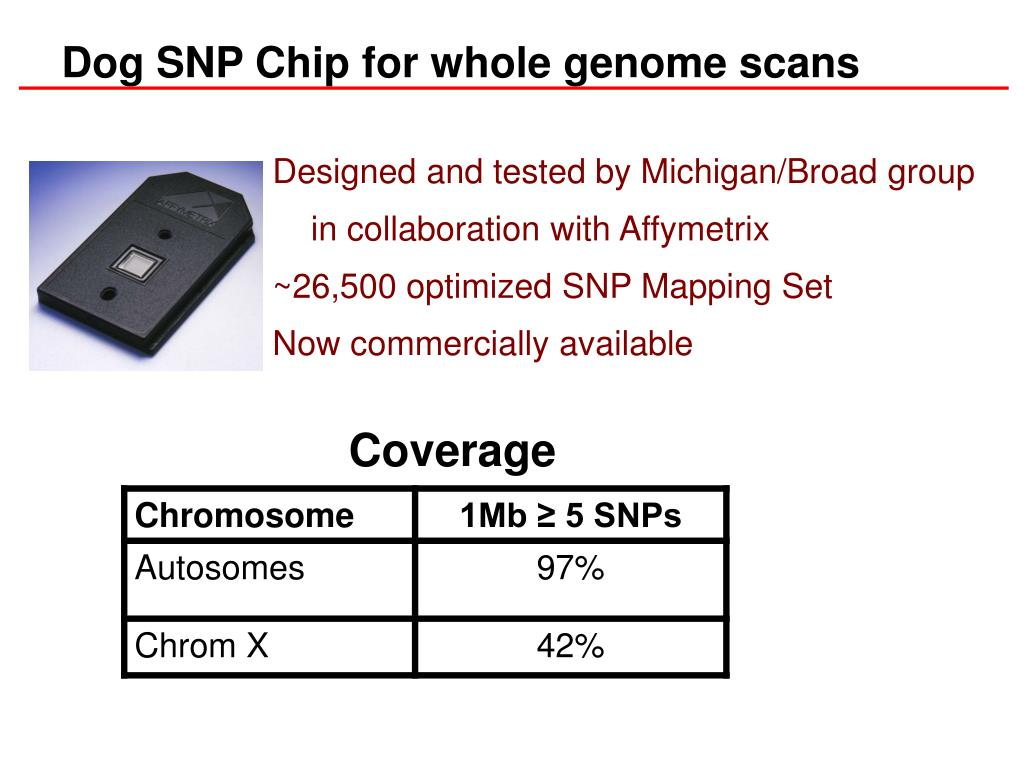 Dog SNP Chip for whole genome scans