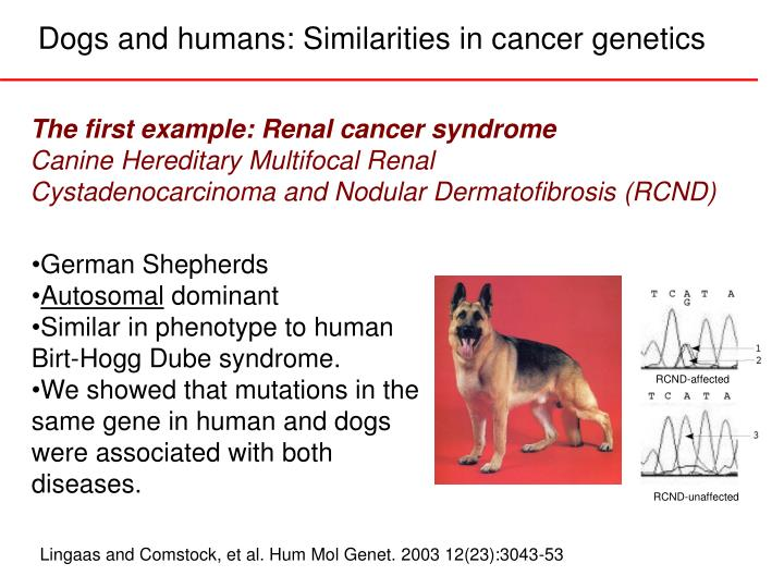 Dogs and humans similarities in cancer genetics