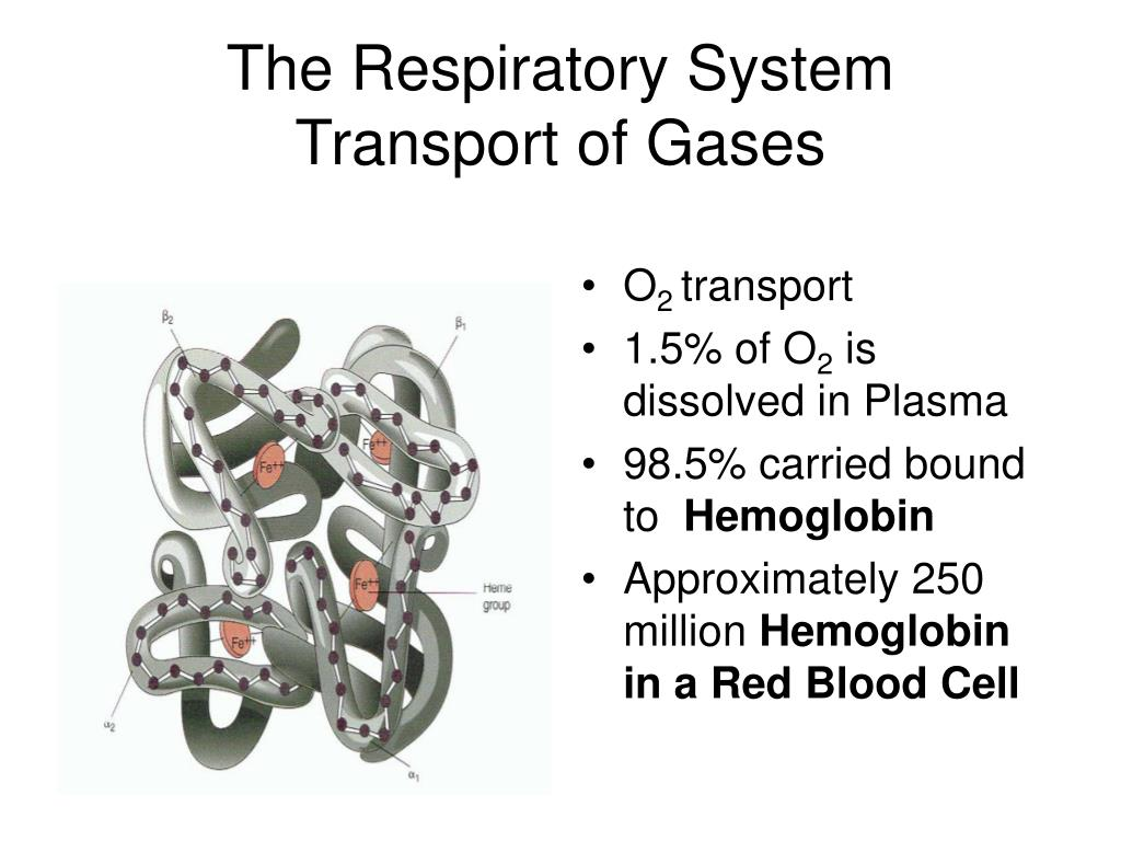 transport of respiratory gases pdf