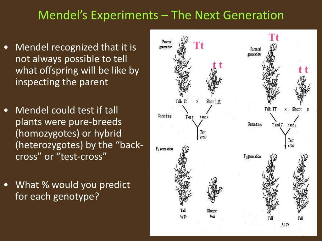 Mendel's Experiments – The Next Generation