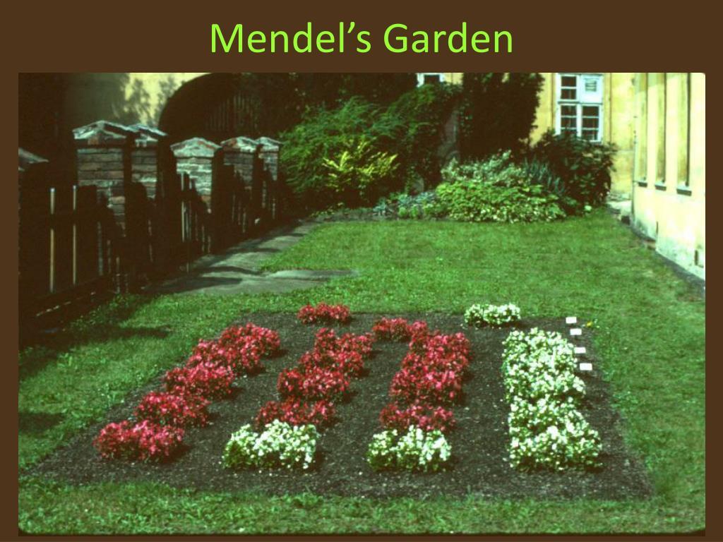 Mendel's Garden