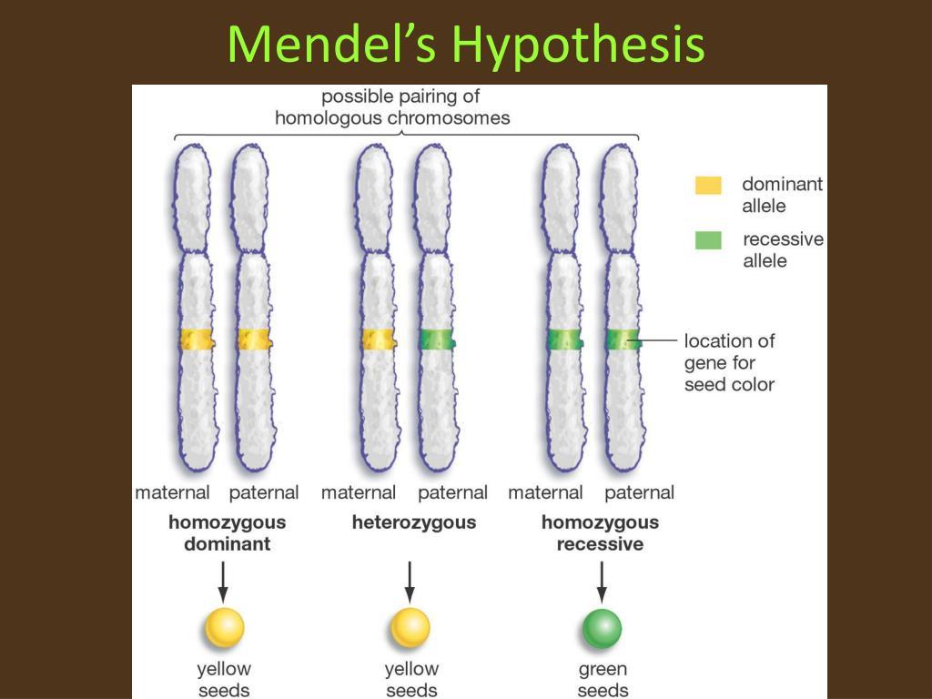 Mendel's Hypothesis