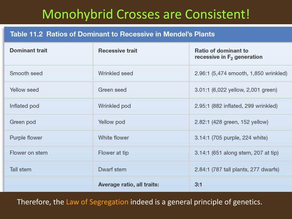 Monohybrid Crosses are Consistent!