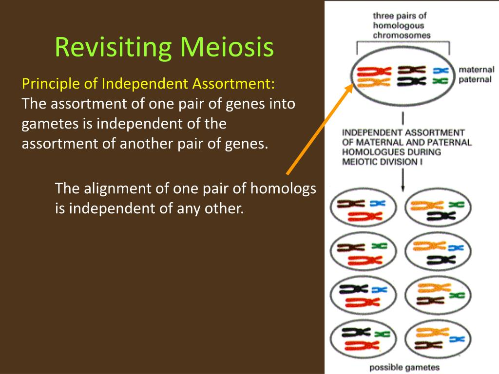 Revisiting Meiosis