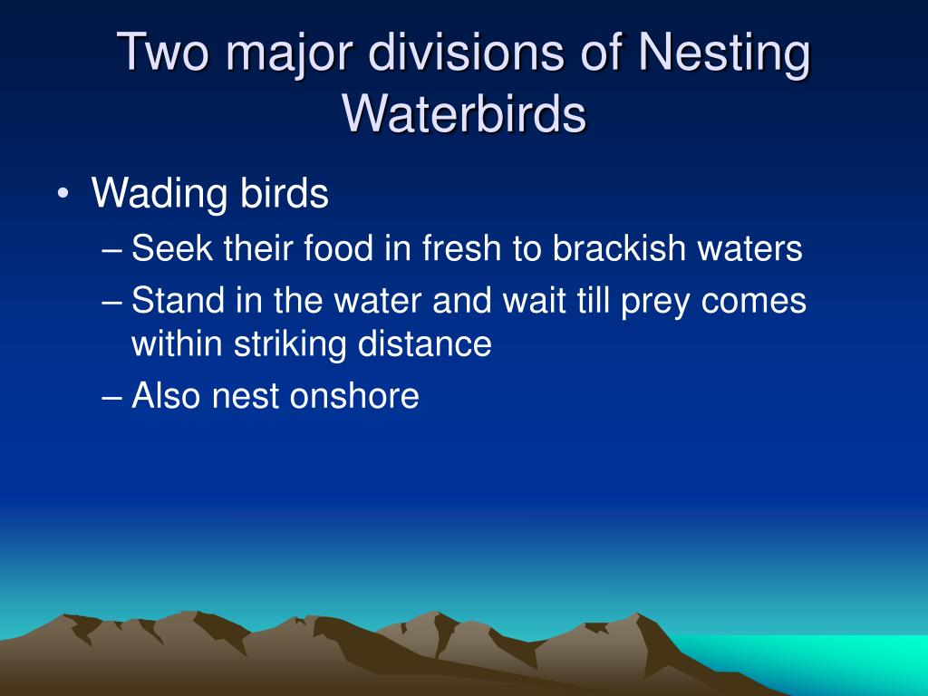 Two major divisions of Nesting Waterbirds