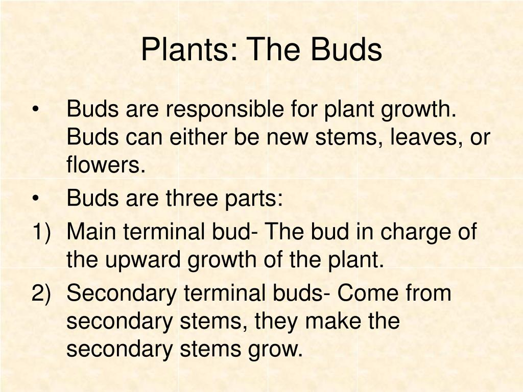 Plants: The Buds