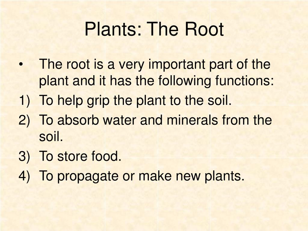 Plants: The Root